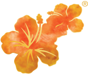 Hawaiian Tropic Lower